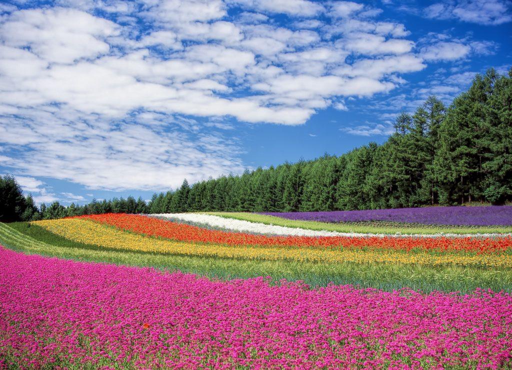 紅葉や桜だけじゃない!中国人観光客に人気の季節観光スポット